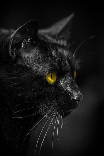Black Cat Halloween